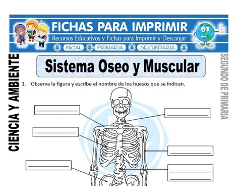 Sistema Oseo y Muscular para Segundo de Primaria - Fichas ...