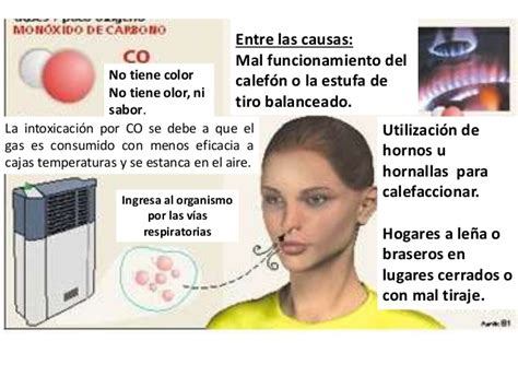 sistema respiratorio 20 638   diario19.com