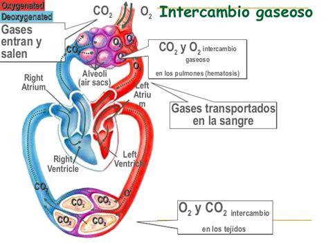 Sistema respiratorio (5)