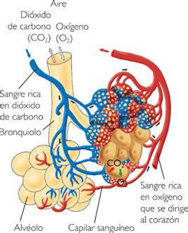 Sistema Respiratorio | Biblioteca de Investigaciones