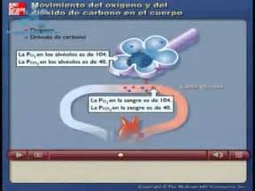 SISTEMA RESPIRATORIO  Intercambio Gaseoso  | Doovi