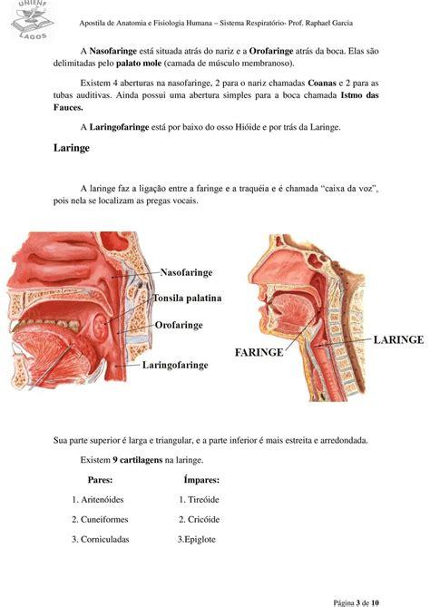 Sistema Respiratório - PDF