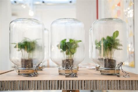Sistemas de autorriego para tener plantas dentro de casa
