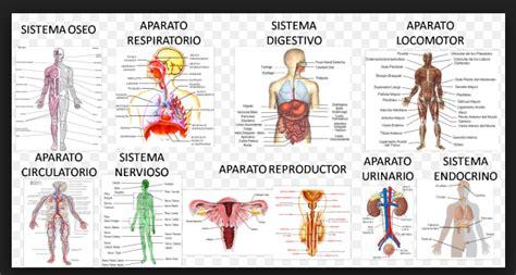 Sistemas del cuerpo Humano y sus Funciones – Inicio