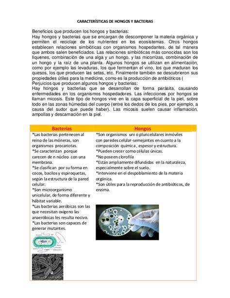 Snap Anatomía de los Hongos Información y Características ...