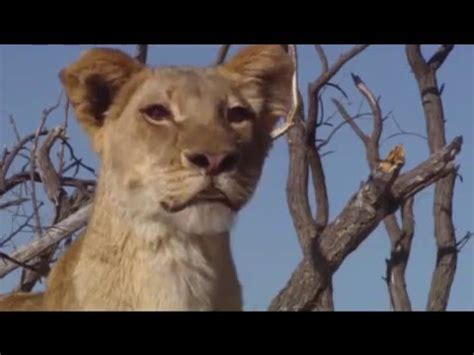 Sneak Peek for Live-Action Lion King Remake (READ ...