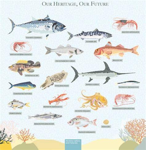 Sobrepesca en el 93% de las poblaciones de peces del ...