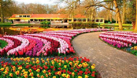 Solo aqui encontraras paisajes de flores en primavera ...