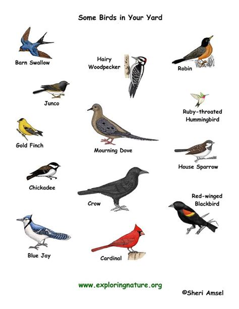 Some Types Of Birds And Their Names | Birds | Pinterest ...