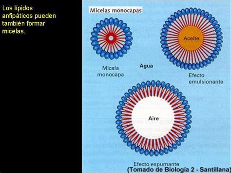 Son biomoléculas orgánicas, compuestas básicamente por ...