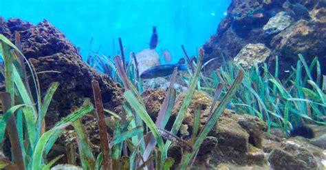 Son Las Algas Plantas Acuaticas   SEONegativo.com