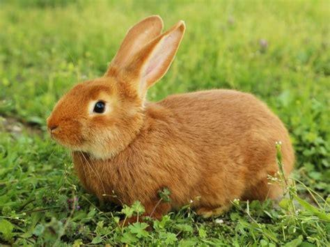 soñar con conejo | horoscopos | Pinterest | Conejo ...