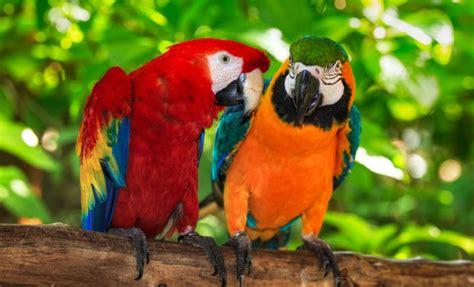 Soñar con pájaros de colores: alcanzar el éxito