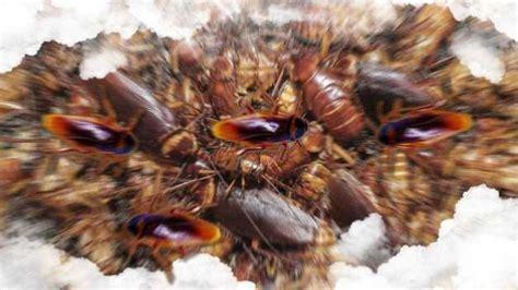 Soñar con una invasión de Cucarachas ⋆ Soñarconcucarachas.com