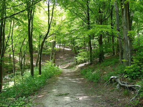 Soñar que nos perdemos en un bosque - Esoterismos.com
