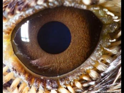 ¡Sorprendente! Mira los espectaculares ojos de animales ...