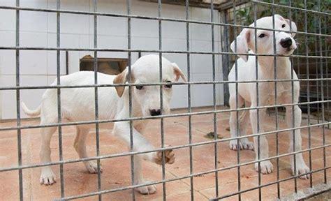SOS canino - InfoTúria Periòdic del Camp de Túria