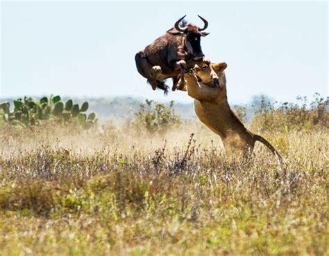 South Africa   The Luxury Safari Company