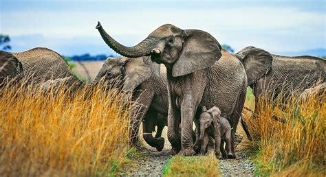 Southern Africa Wildlife Safari   Itinerary & Map ...
