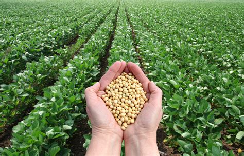 Soybean Futures Market Technical Analysis   Artac Advisory