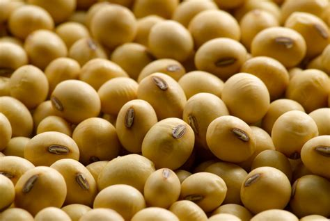 Soybean Oil Futures | Daniels Trading
