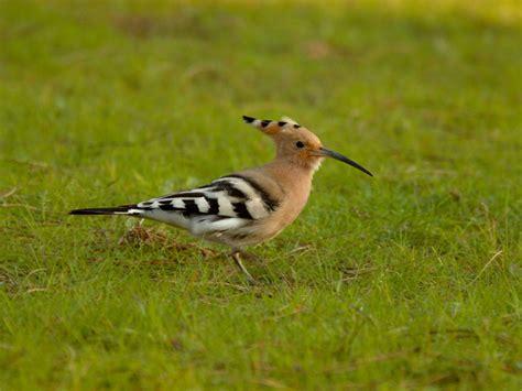 Spanish photos  birds seen in Britain .   Wild About Britain