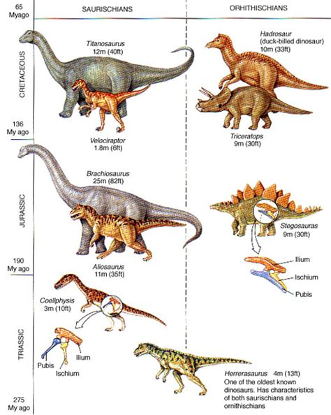 Species of Dinosaurs   Dinosaurs Pictures and Facts