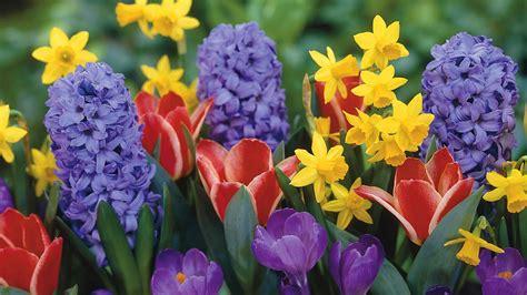 spring flowers   Free Large Images | beb320@aol.com ...