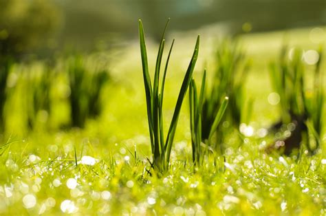 Spring Free Stock Photo - Public Domain Pictures