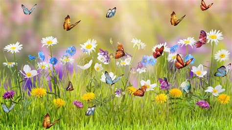 Spring Meadow Full HD Fondo de Pantalla and Fondo de ...