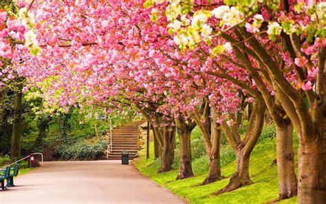 Spring Scenery Wallpapers   ModaFinilsale