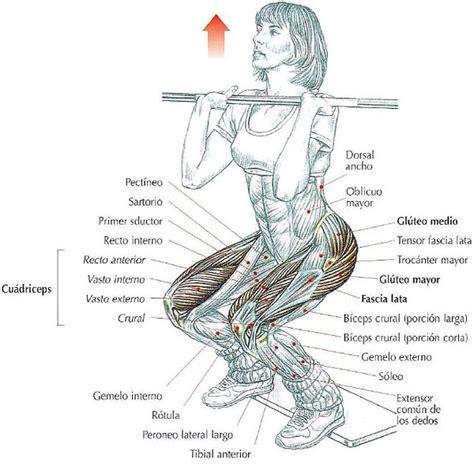 Squat o sentadillas frontales con barra