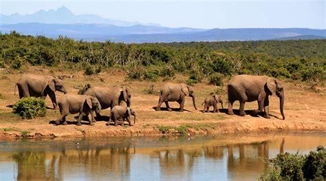 무료 사진: 코끼리, 코끼리의 무리, 아프리카 부시 코끼리, 아프리카, 황야 - Pixabay의 무료 ...