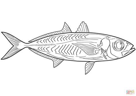 魚類 ぬりえ