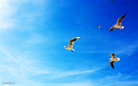 طيور في السماء الزرقاء wallpaper   AllWallpaper.in #1738 ...
