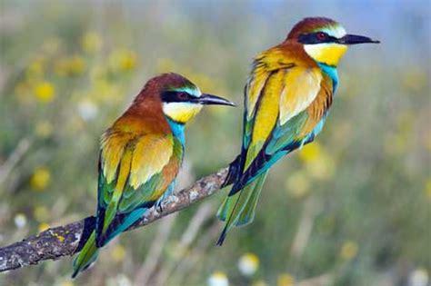 ფანჯარა: Birds