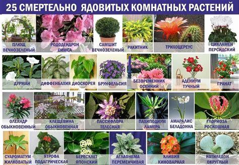 Домашние растения — самые красивые и популярные  50 фото ...