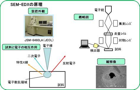 走査型電子顕微鏡 エネルギー分散型X線分光法の原理 | イビデンエンジニアリング