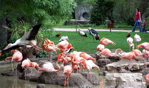 Мадридский зоопарк  Parque zoologico de Madrid