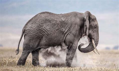 写真家が撮った野生動物の本当の世界_中国網_日本語