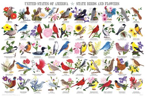 State Birds and Flowers Poster by Feenixx Publishing
