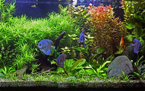 Steps For Setting Up Your Tropical Fish Aquarium ...