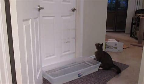 Su gato ya sabe como abrir las puertas de la casa