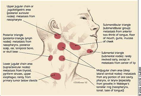 submandibular glands | body/health | Pinterest