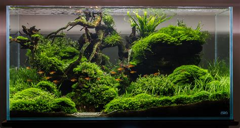 Substrate Less Planted Tank | APSA