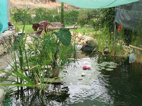Sujeciones de plantas palustres - Plantas de estanque