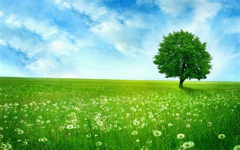 Summer Green Landscape 6957 2560 x 1600 - WallpaperLayer.com