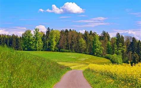 Summer Landscape wallpaper 239000