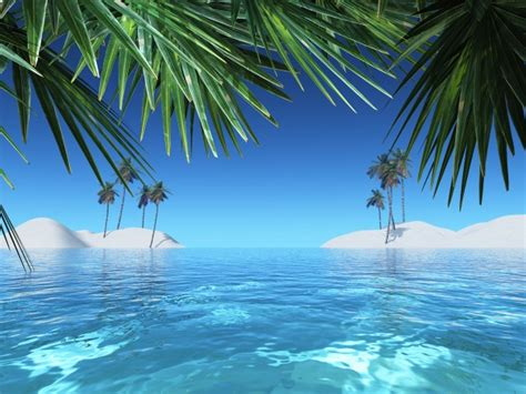 Summer landscape with palm trees Photo | Free Download