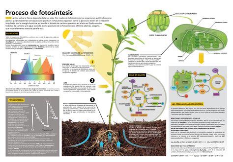 Super infografía de la fotosíntesis para vuestras alas ...